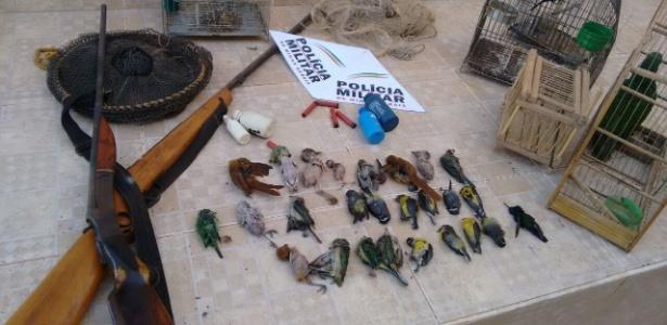 Pássaros mortos recolhidos pela polícia no interior de Minas Gerais