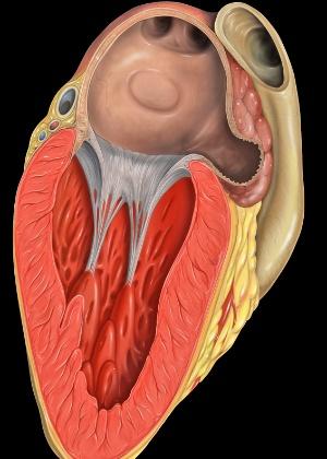 Corte transversal do coração mostra apêndice atrial esquerdo - Divulgação