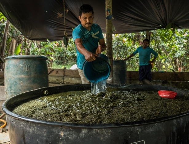 23.jun.2017 - Homem lava folhas de coca em campo de produção em La Hormiga, na Colômbia - Juan Arredondo/The New York Times
