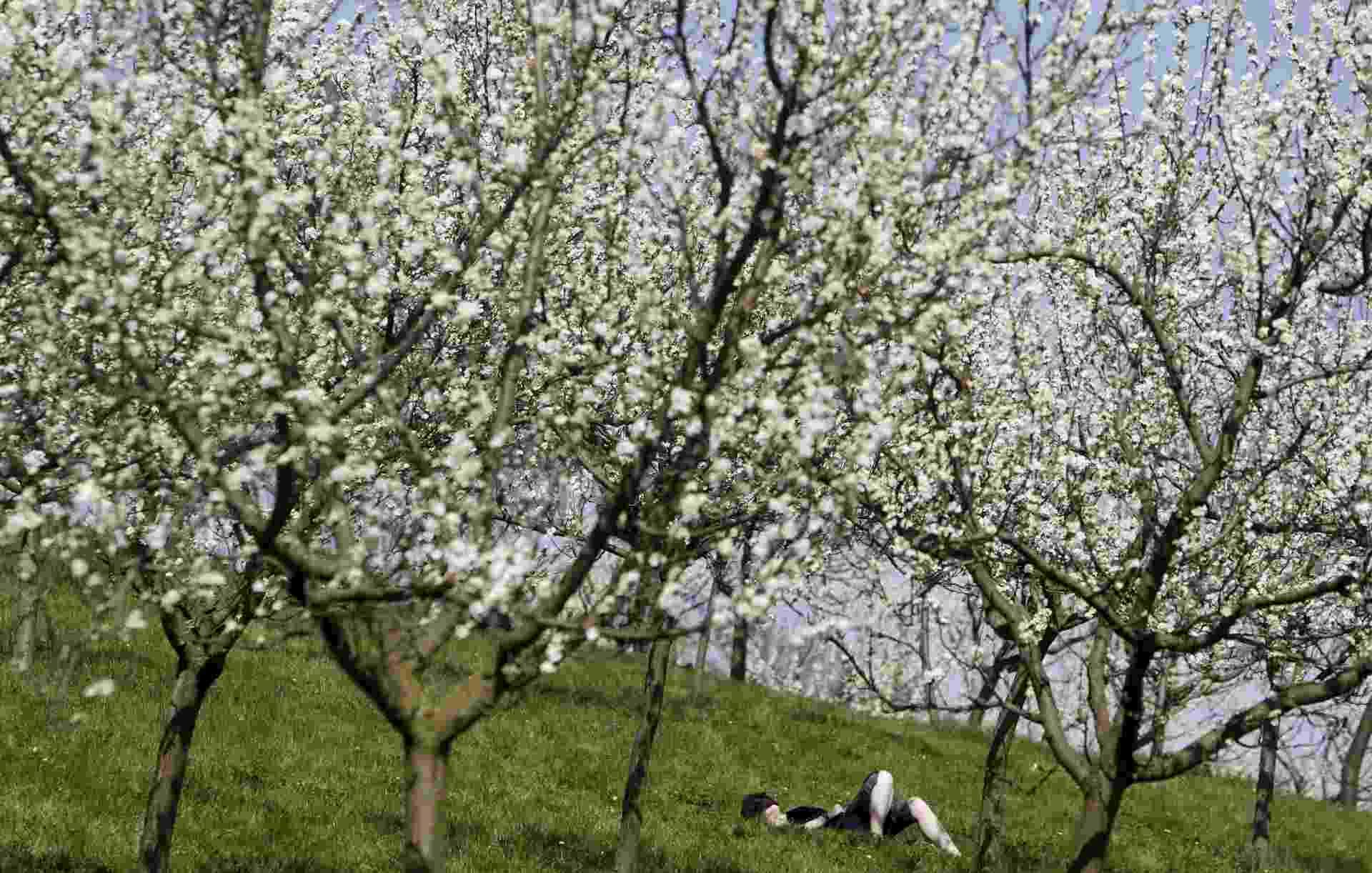 Mulher deita na grama sob árvores florescendo durante a primavera em Petrin Hill, Praga, capital da República Tcheca - David W Cerny/Reuters