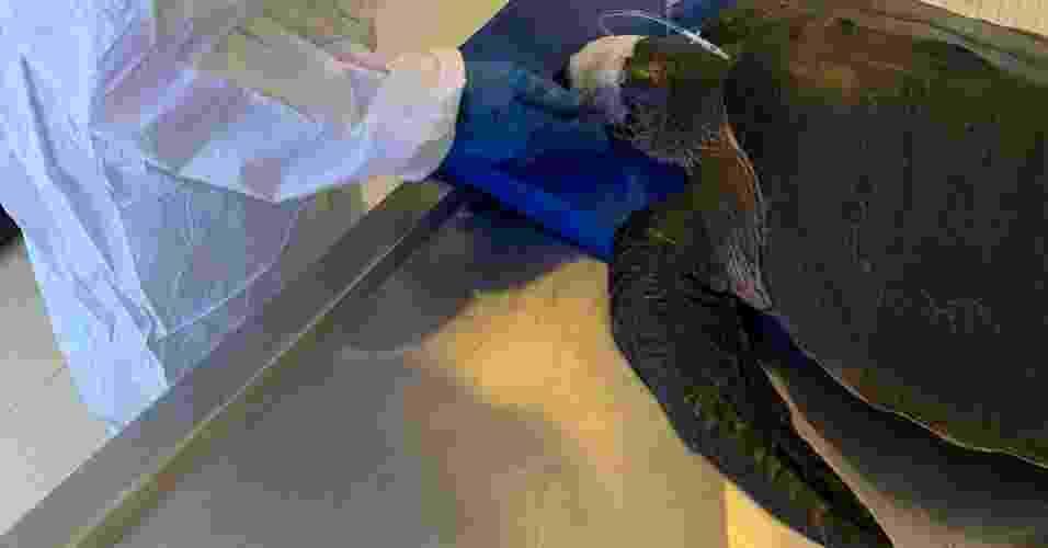 Centro de Descontaminação de Fauna Oleada da UERN