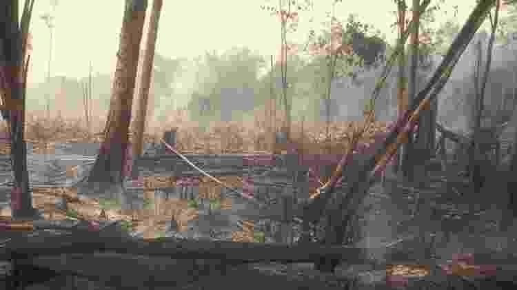 'O desmatamento inibe investimento — que investidor sério vai querer investir na Amazônia, rodeada por ilegalidade?' - Getty Images - Getty Images