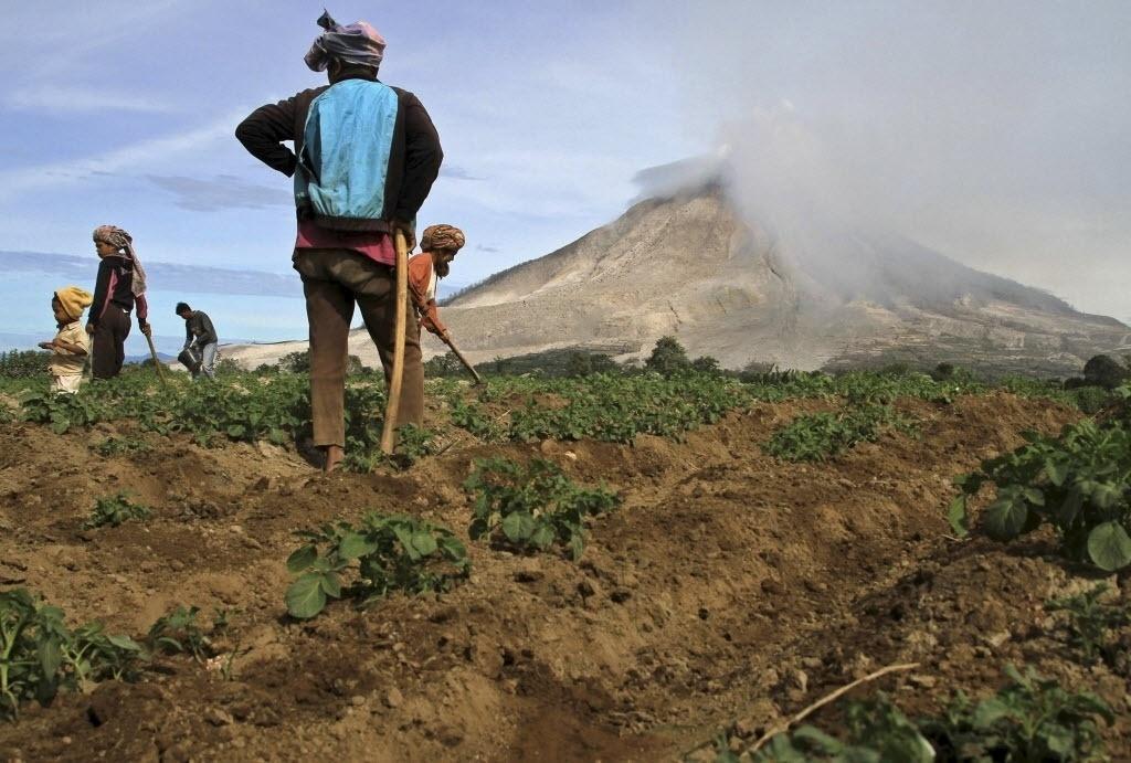 6.jul.2015 - Agricultores trabalham em uma plantação de batatas vizinha do Monte Sinabung, na província de Sumatra do Norte, na Indonésia. Mais de 10 mil pessoas de 12 vilarejos deixaram suas casas e foram removidas para campos de refugiados devido a erupção do vulcão