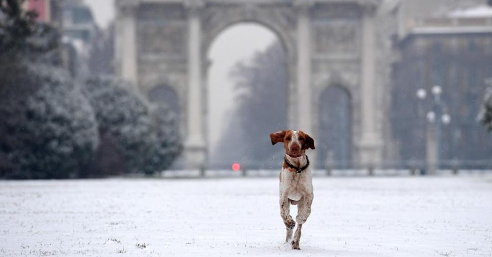 1º.ma.2018 - Cão corre no jardim de Sempione após queda de neve em Milão, na Itália