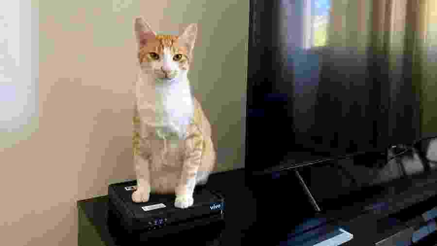 Gato se apoia em roteador caseiro de wi-fi - Rodrigo Lara/UOL
