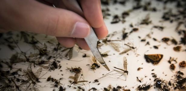 2.nov.2017 - Pesquisador da sociedade entomológica de Krefeld, na Alemanha, analisa insetos