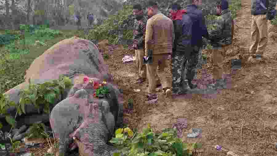 Moradores de um vilarejo e trabalhadores rurais se reúnem em torno do copo de um dos elefantes atropelados - AFP