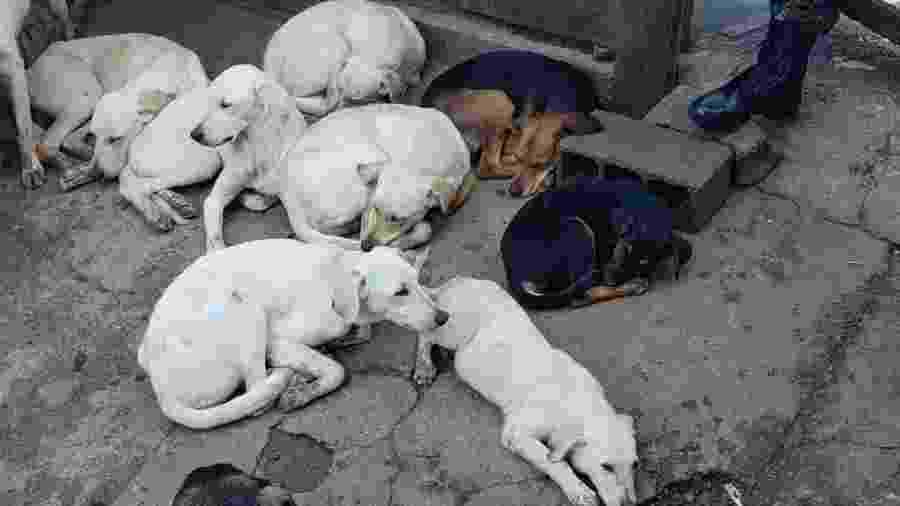 Homem mantinha 21 cães sob maus-tratos em Carapicuíba (SP) - PMESP/Divulgação