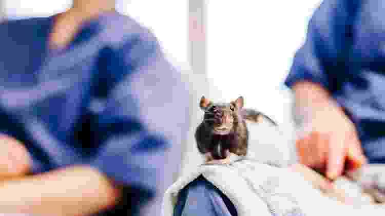 Em seu laboratório, os Mosers trabalham com animais, mas já estão iniciando testes clínicos com humanos - Kavli Institute for Systems Neuroscience - Kavli Institute for Systems Neuroscience