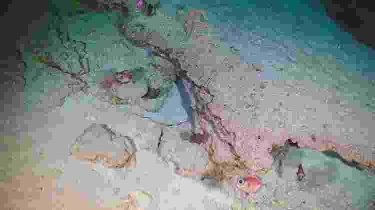 Peixes de mar profundo do gênero Allocyttus e corais negros dos gêneros Stichopathes (no alto) e Bathypathes (à esq.) na região central do platô da Elevação do Rio Grande - NOC / UK