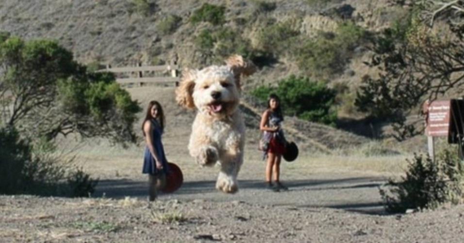21.jul.2015 - As meninas não estão observando um cão gigante correr. O animal só foi fotografado mais a frente delas, enquanto movimentava as patinhas. É tudo culpa da perspectiva