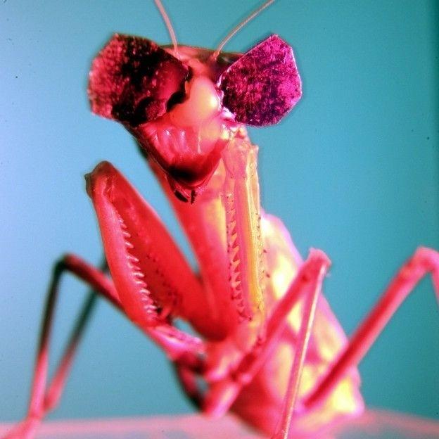 """No estudo, publicado na revista científica """"Scientific Reports"""", a equipe da Universidade de Newcastle, no Reino Unido, aplicou nos insetos """"óculos 3D"""", semelhantes aos usados por humanos no cinema, mas feitos com cera de abelha, para testar sua visão"""