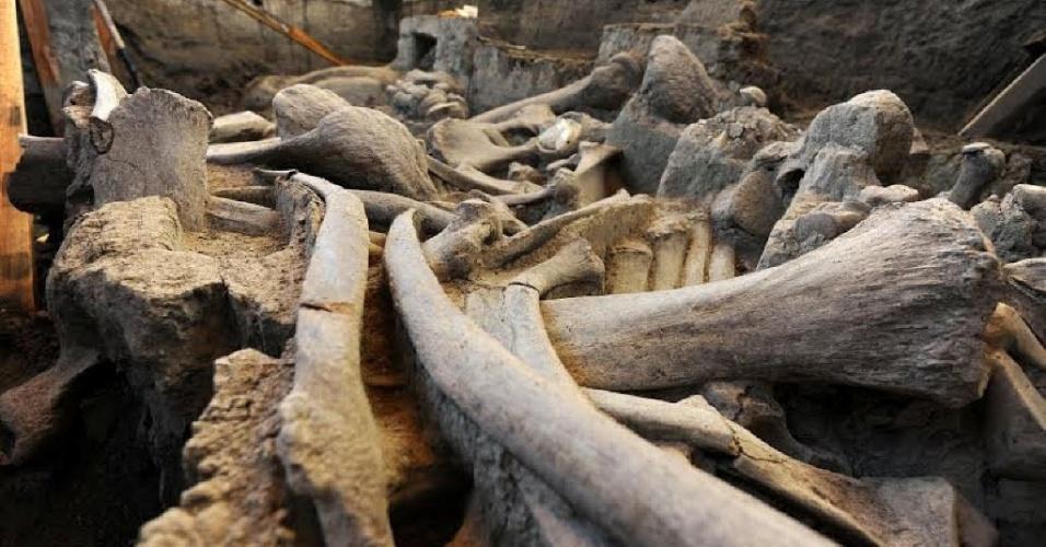 18.mai.2016 - Ossos fossilizados de um mamute ficam expostos em local de escavação do INAH (Instituto Nacional de Antropologia e História do México). Os fósseis datam do Pleistoceno e foram descobertos em dezembro de 2015 por trabalhadores enquanto cavavam uma fossa séptica. A foto da descoberta foi divulgada pelo INAH na quarta-feira (18)