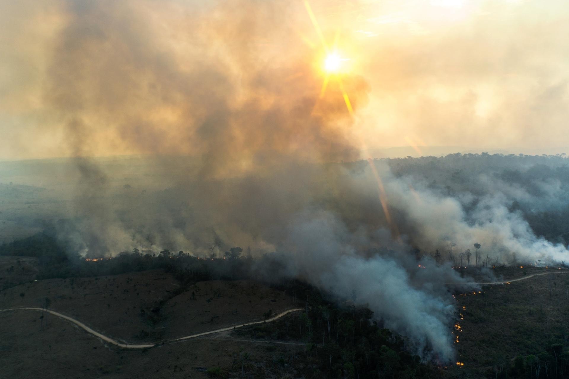 Amazônia Arde Queimadas Destroem Fauna E Flora E Agravam O