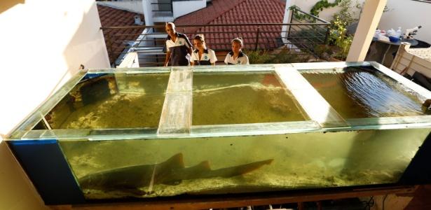 Equipe do Aquário de Ubatuba resgata animal em Ribeirão Preto (SP) - Joel Silva/Folhapress