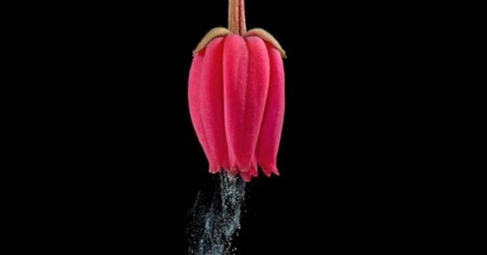 Os segredos da polinização - o transporte de grãos de pólen de uma flor para a outra - são o tema de Pollination Power, livro em que a fotógrafa e cientista britânica Heather Angel fez impressionantes flagrantes dos segredos e truques usados pelas plantas para fazer com que o vento não seja o único a ajudar em sua reprodução