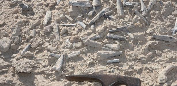Cientistas de Brasil e China encontram coleção de ovos de pterossauro