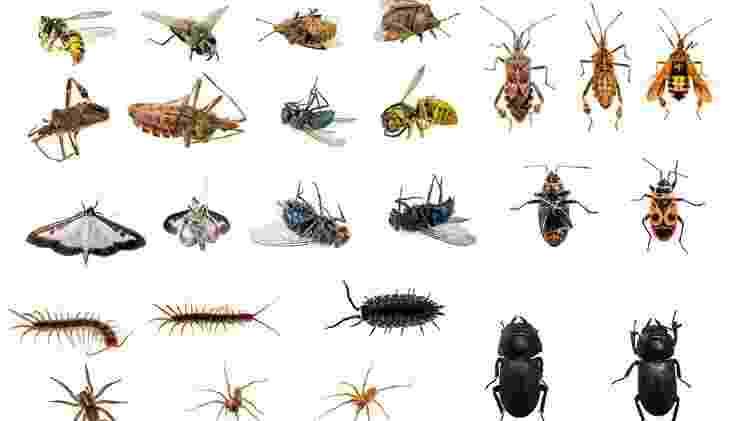 Há muito mais insetos que humanos no mundo, e é provável que eles sobrevivam a nós - iStock - iStock