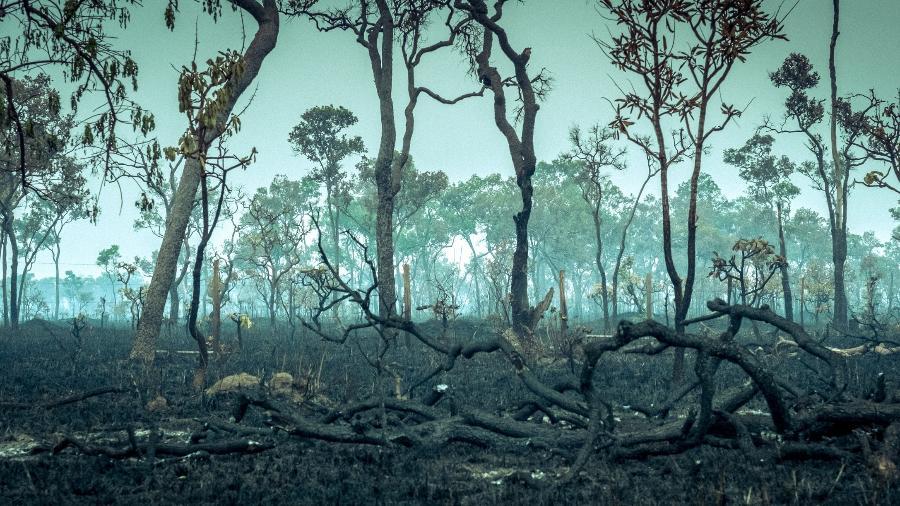 Imagem mostra trecho da floresta amazônica destruída por incêndios intencionais para a plantação de soja e criação de gado - Getty Images