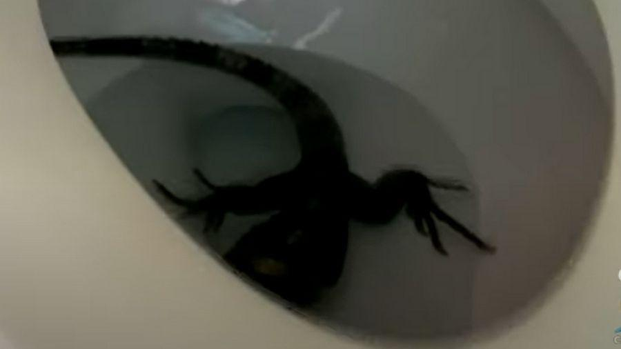 Dono de residência travou batalha com iguana antes de problema ser resolvido - Reprodução/Youtube CBS