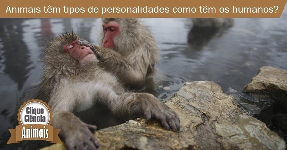 Clique Ciência: animais têm personalidade?