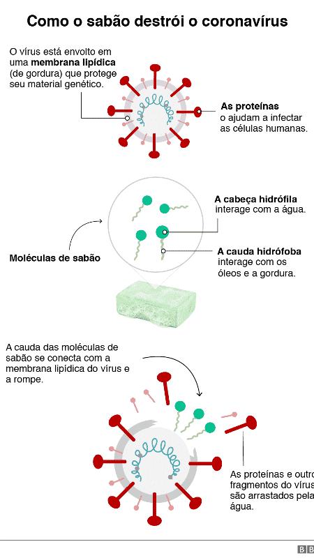 Representação gráfica de como o sabão destrói o coronavírus - BBC - BBC