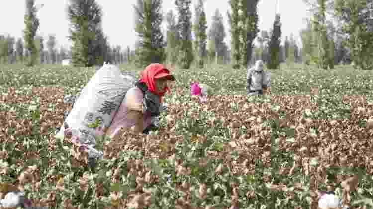 Campo de algodão em Xinjiang em 2010 - Getty Images - Getty Images
