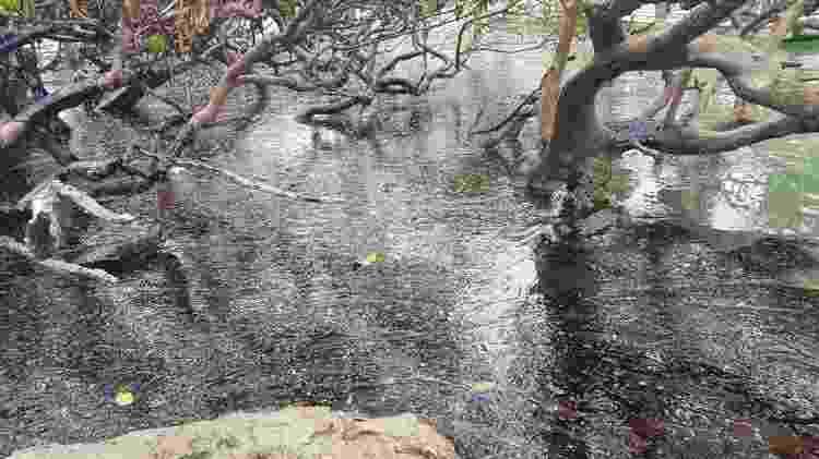 Manguezais no nordeste foram atingidos por petróleo no ano passado - Clemente Coelho Júnior - Clemente Coelho Júnior