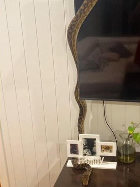 Imagem da cobra na sala da australiana - Reprodução/Facebook/Jodie Davey