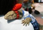 Já viu um lagarto de lacinho? Feira reúne animais de estimação exóticos - Barbara Walton/EPA/EFE