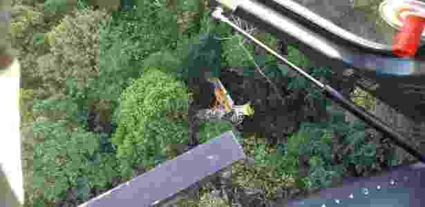 Avião agrícola aplicava defensivo agrícola em bananal em Garuva (SC) - 2ª Companhia de Aviação da Polícia Militar/Divulgação