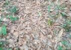 Você consegue enxergar a cobra escondida nesta foto? - Reprodução