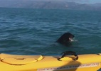 Foca ganha batalha contra polvo gigante e vira atração na Nova Zelândia (Foto: Reprodução)