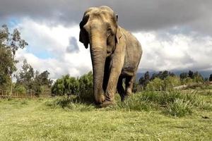 Como transportar um elefante de avião? A viagem de Ramba ao Brasil, após décadas de maus-tratos (Foto: DIVULGAÇÃO/SEB)