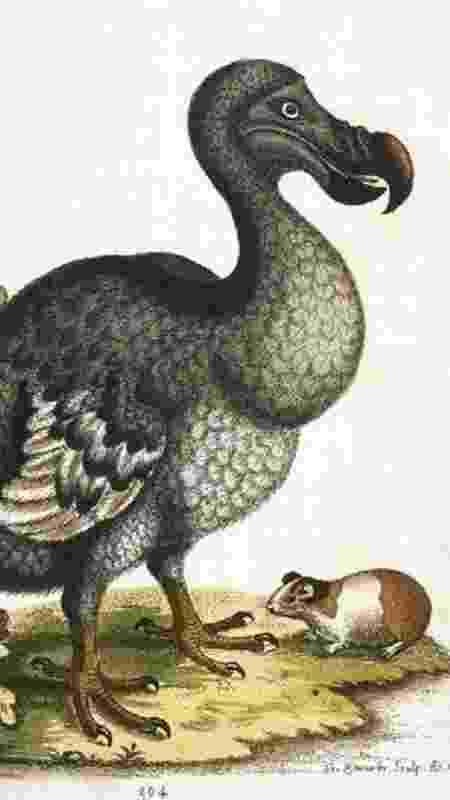 O dodô se tornou um símbolo da extinção decorrente da ação humana - Getty Images