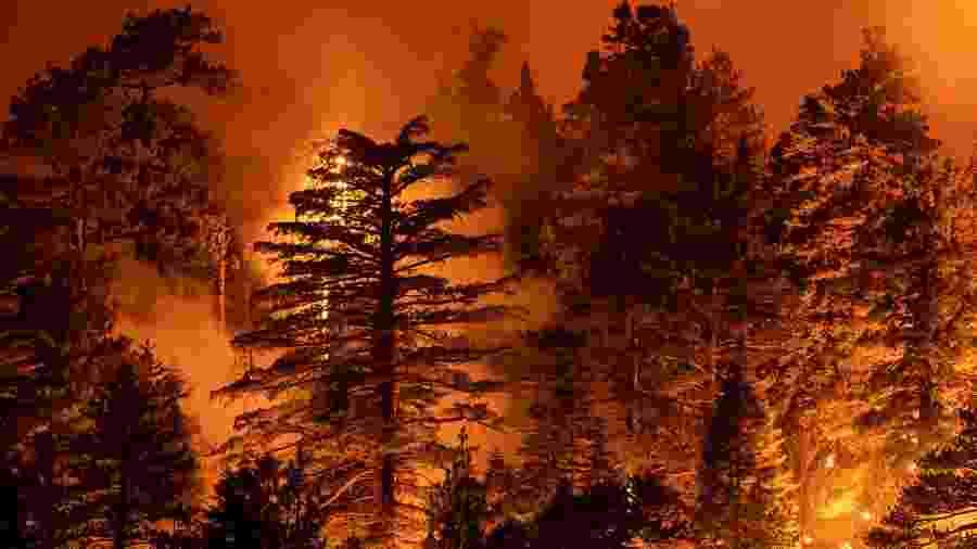 Incêndio na Califórnia vem aumentando nos últimos dias, preocupando autoridades locais - David McNew/Getty Images/AFP