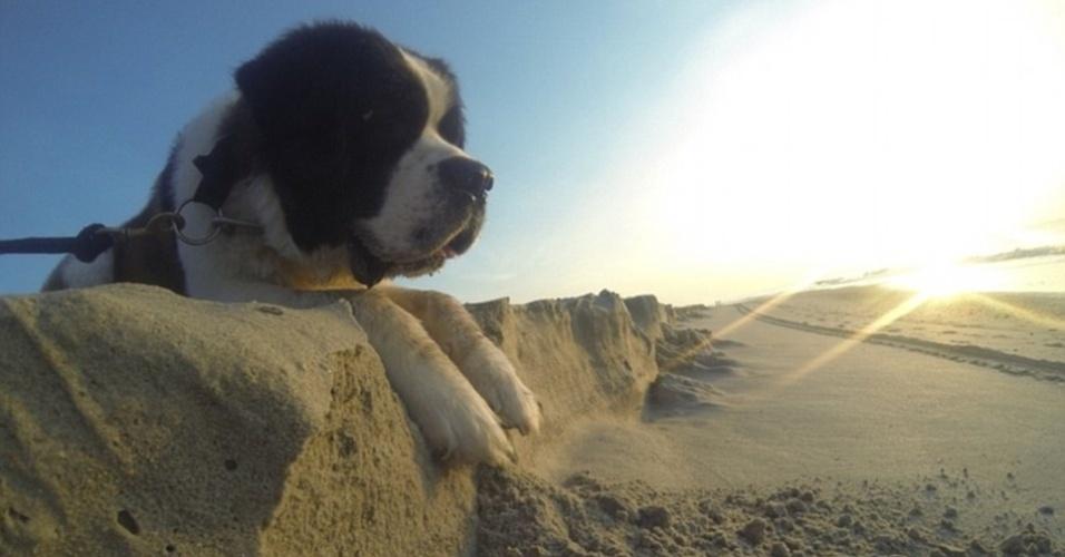 21.jul.2015 - O São Bernardo não está admirando o pôr do sol em uma praia de cima de um penhasco. O cão só foi fotografado em um monte de areia. É tudo culpa da perspectiva