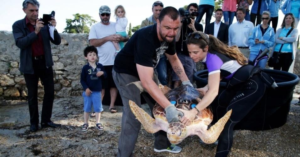 18.mai.2016 - Tartaruga marinha nascida em cativeiro é liberada no mar por funcionários da marinha francesa em Antibes. O aquário Marineland está conduzindo um estudo sobre a adaptação das tartarugas-cabeçudas nascidas em cativeiro