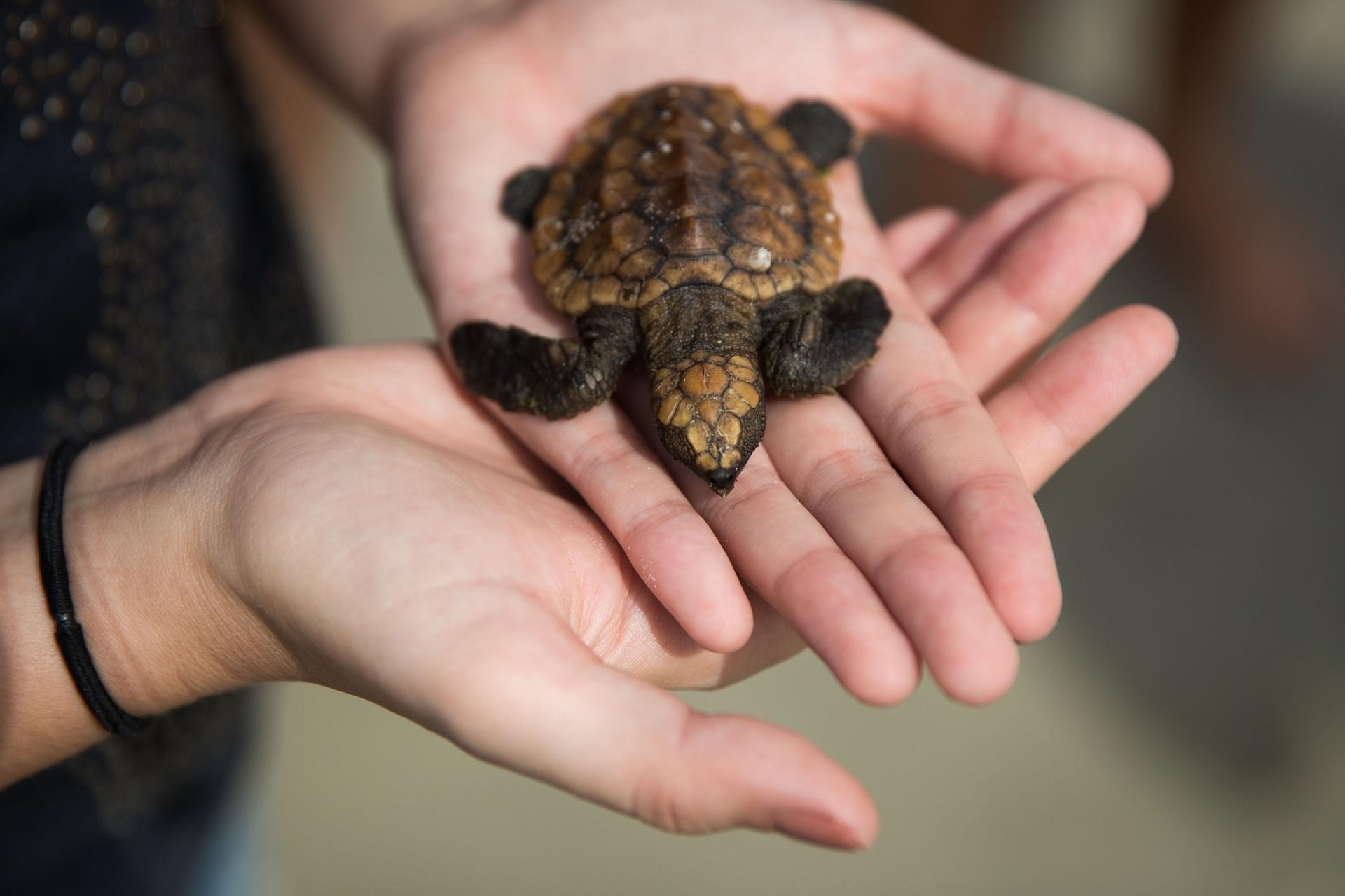 6.out.2016 - Veterinária segura tartaruga ferida que foi resgatada em Daytona Beach, na Florida (EUA). Enquanto o furacão Matthew se aproxima, ambientalistas monitoram como a previsão de ventos de até 250 km/h vai afetar os ovos de tartarugas enterrados na areia e criam planos para os impactos que a tempestade pode causar