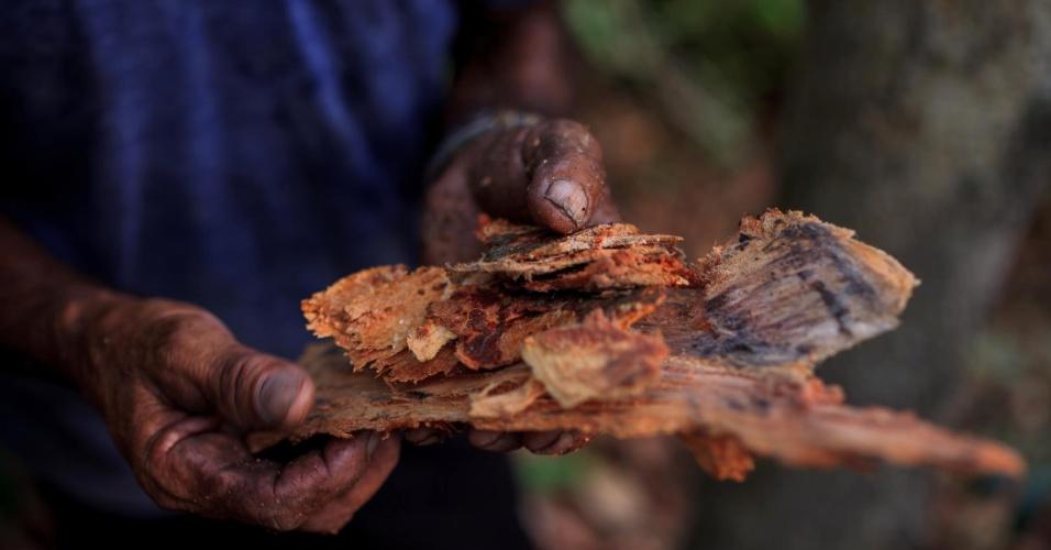 Pedro Dias de Oliveira, 64, corta a casca de pau-brasil. Os colonos possuem grande conhecimento no manejo da flora local e utilizam tanto para alimentação quanto para fins medicinais