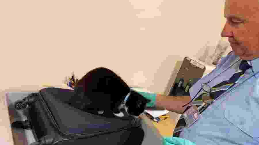 A gata Candy se escondeu na mala dos seus donos - Reprodução/Facebook
