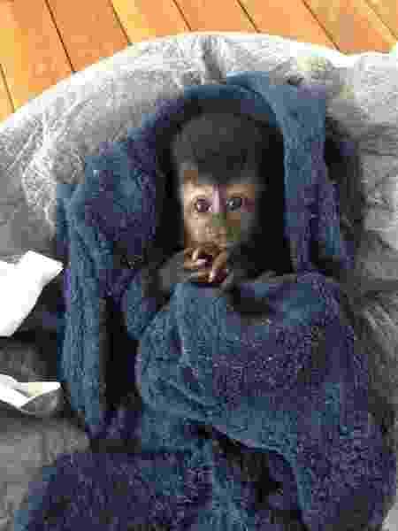 Macaco tem aproximadamente 15 dias de vida - Divulgação - Divulgação