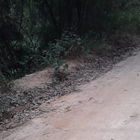 Cabeça decapitada é encontrada em sacola no interior de SP - Divulgação/Polícia Civil