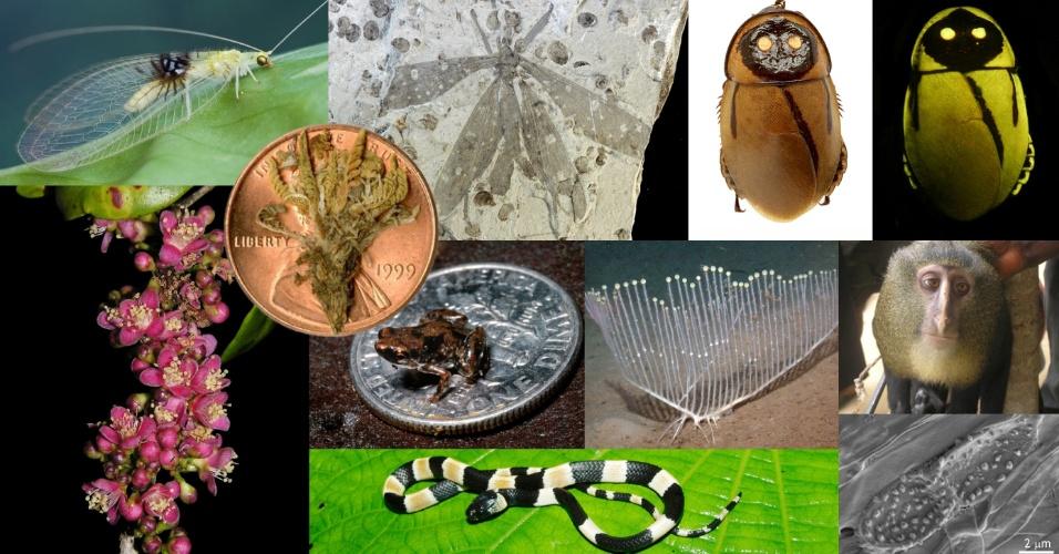 23.mai.2013 - O Instituto Internacional da Exploração de Espécies, da Universidade do Arizona, nos Estados Unidos, divulgou nesta quinta-feira (23) a lista das espécies mais notáveis nomeadas em 2012. O Instituto, que reúne um comitê global de taxonomistas, escolheu os dez seres - seja do mundo botânico, zoológico ou microbiológico - das mais de 140 espécies identificadas cientificamente no ano passado