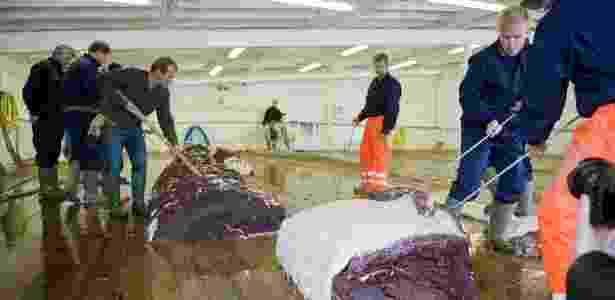 Homens cortam pedaços de uma das duas baleias de 35 toneladas capturadas por um barco em Hvalfjsrour, na costa ocidental da Islândia - Halldor Kolbeins/AFP