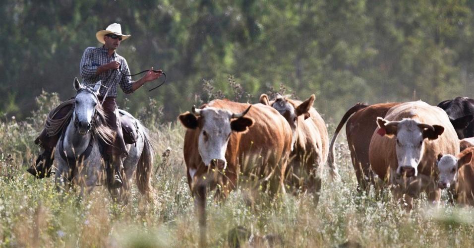 28.mai.2013 - Muitas raças tradicionais de animais de fazenda, como vacas, ovelhas e cabras, têm caído em desuso, muitas vezes porque produzem menos carne ou leite do que novas raças, prejudicando a biodiversidade do planeta, alerta  Zakri Abdul Hamid, diretor do novo painel da ONU (Organização das Nações Unidas) sobre a biodiversidade. Segundo estimativas de 2012, 22% das raças de rebanhos de gado do mundo estão em risco de extinção