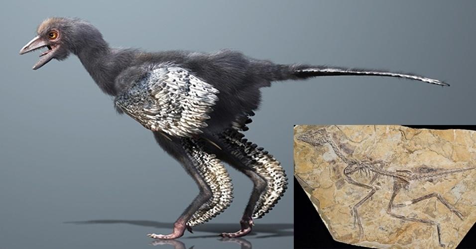 29.mai.2013 - Cientistas encontraram um fóssil preservado em uma placa de xisto na China que pode ser da criatura mais antiga da linha evolutiva das aves. Batizado de