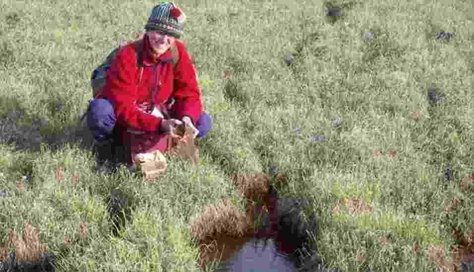 29.mai.2013 - Catherine La Farge, da Universidade de Alberta, recolhe musgos nas bordas de uma geleira que recuou em Sverdrup Pass, na ilha Ellesmere, no extremo Norte do Canadá. As plantas enterradas há cerca de 400 anos no gelo conseguiram voltar à vida, após a pesquisadora triturou o material vegetal e o colocar em terra de jardim. Das 24 amostras, sete apresentaram crescimento, regenerando-se com sucesso a partir do material de origem - University of Alberta