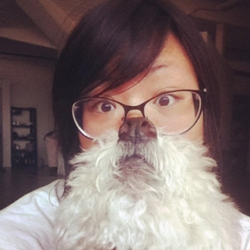 A modinha começou com donos de gatos, mas acabou também no mundo canino: donos tiram fotos usando seus bichos como se fossem barbas e publicam na internet