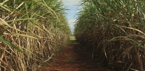 Com nova tecnologia, Brasil poderá produzir 30% a mais de álcool sem aumentar plantio de cana